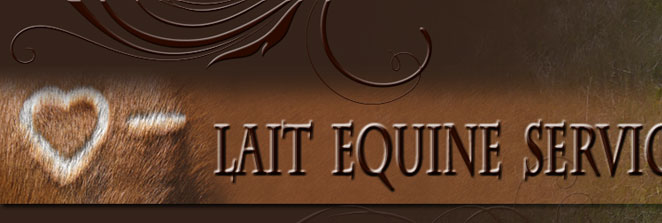Lait Equine Services - Equine Dentistry, Horse Training & Sales